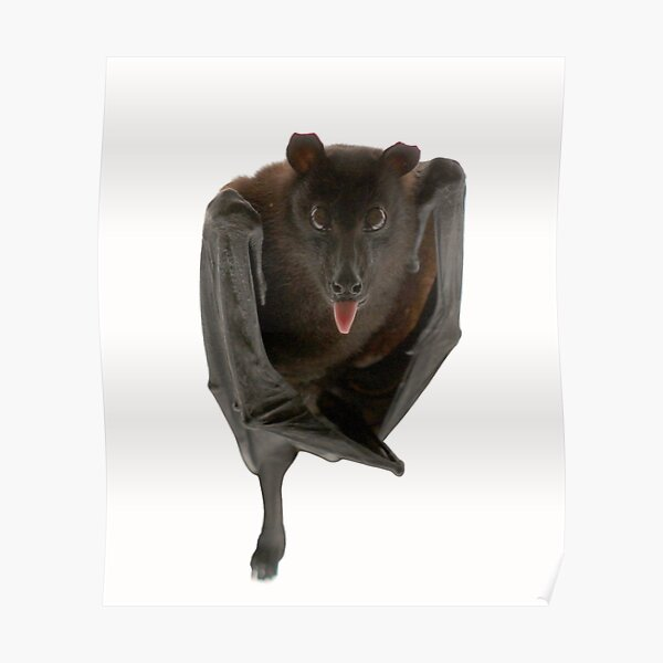 Batzilla the flying fox Poster