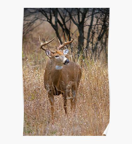 Blood Antlers - White tailed deer Buck Poster