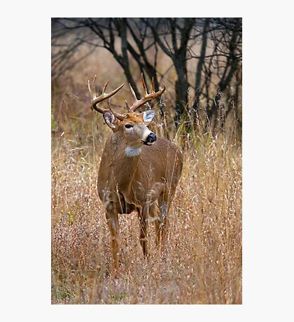Blood Antlers - White tailed deer Buck Photographic Print