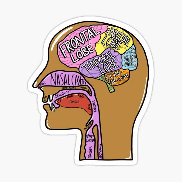 Head anatomy Sticker