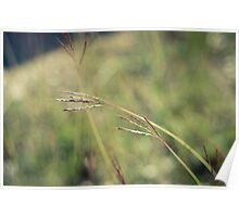 Grassy Knoll Poster