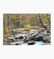 A Light In The Forest - Unami Creek - Green Lane PA Photographic Print