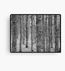 Azr Forest, Kamoua National Park Canvas Print