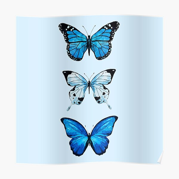 Trio of Blue Butterfly Poster