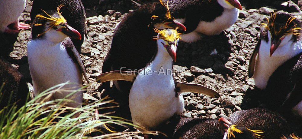 Royal Penguin Running The Gauntlet by Carole-Anne