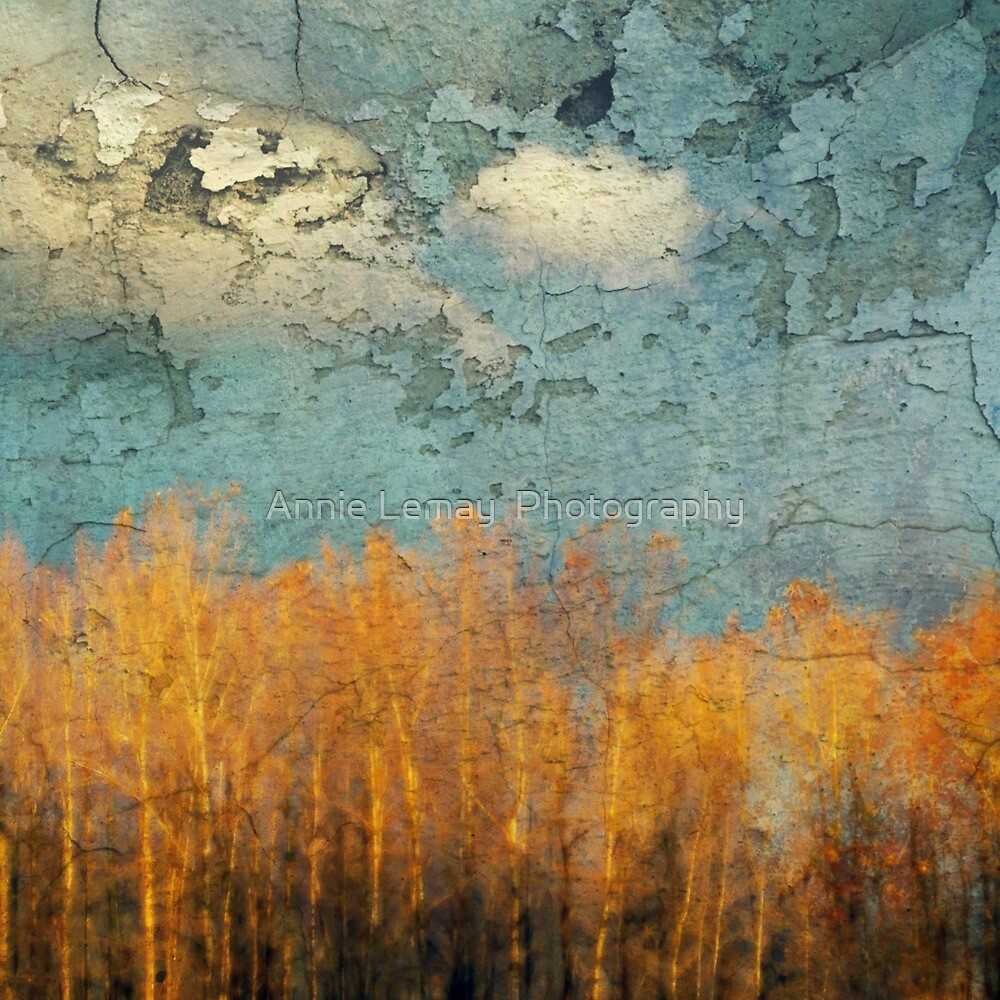 Everglades Abstract by Annie Lemay  Photography