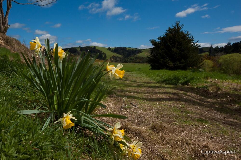 """daffodil farm lawrence new zealand""captiveaspect"