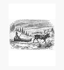 Small sleigh and reindeer Photographic Print