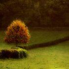 The Autumn tree by Yool