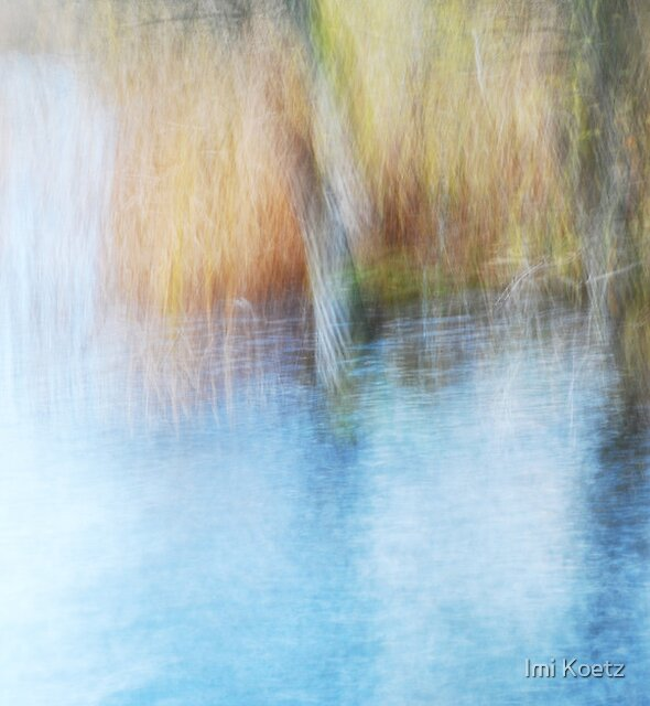 The Colourful Reeds  by Imi Koetz