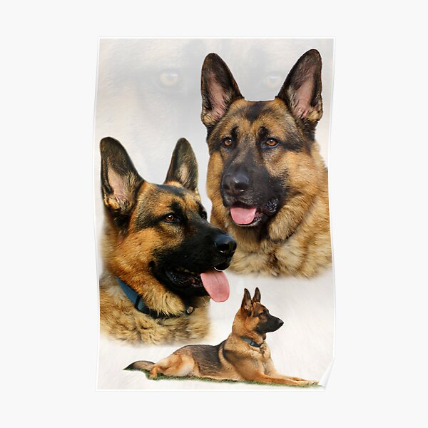 German Shepherd Collage Poster