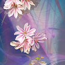 Lewisia by Dale Lockridge