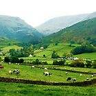Farms at Grasmere, Cumbria, UK by GeorgeOne