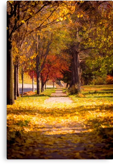 'Autumn Arrives On My Block' Canvas Print by Thomas Young
