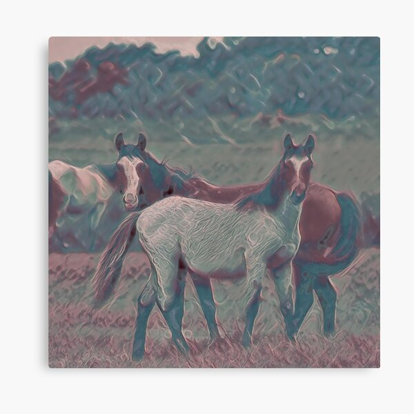 Feral Horses IV Canvas Print