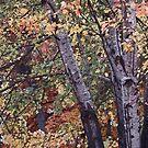 Beautiful Fall Scene by cshphotos