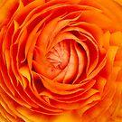 Orange Flower by Alastair Creswell