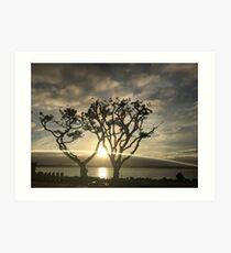Corel Trees Art Print