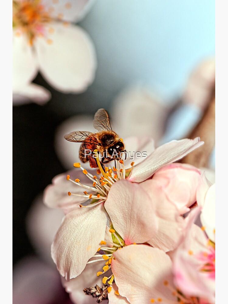"""Bee-utiful"" by AmyesPhotograph"