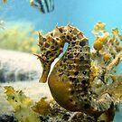 Seahorse and friend by Stephanie Johnson