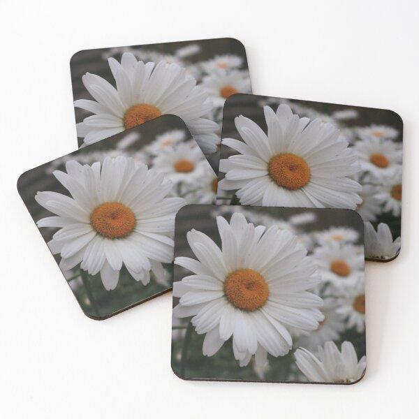 Daisy, Daisy Coasters (Set of 4)