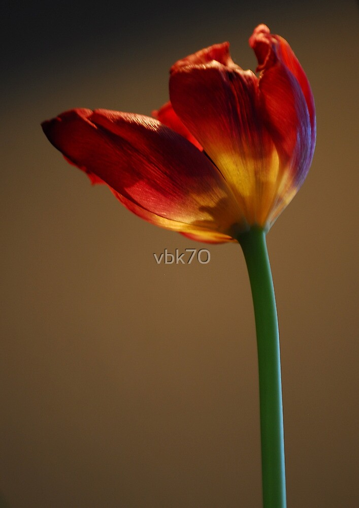 Welcome Spring II by vbk70