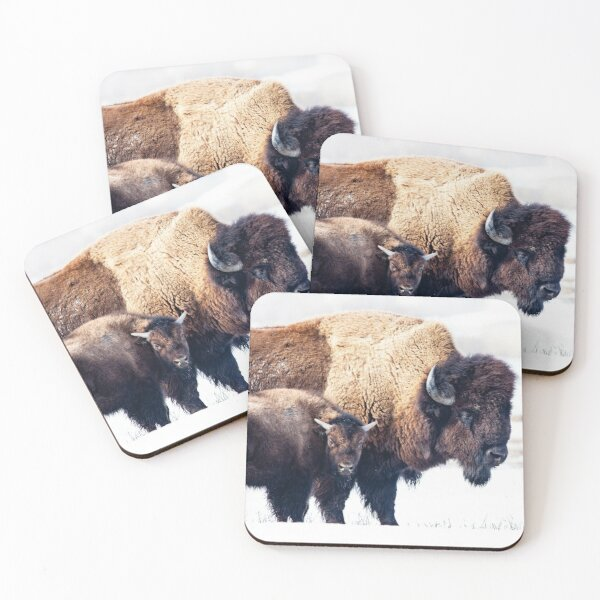 Bison with cub Coasters (Set of 4)