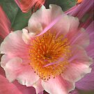 Camellia by Dale Lockridge
