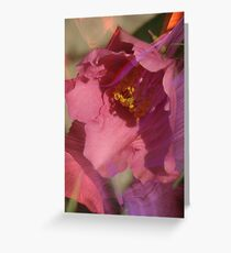 Camellia sasanqua 'Pink Butterfly' Greeting Card
