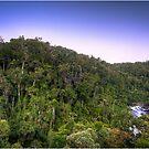 Ranomafana National Park by Fidisoa Rasambainarivo