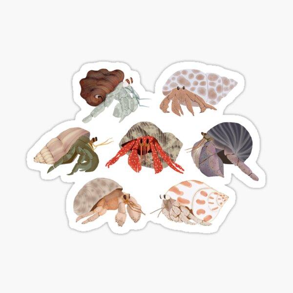 Hermit Crabs Pattern Sticker