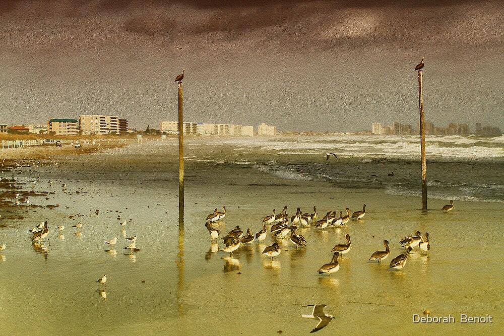 Pelican Haven by Deborah  Benoit