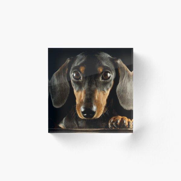 Dachshund Dog photo portrait Acrylic Block