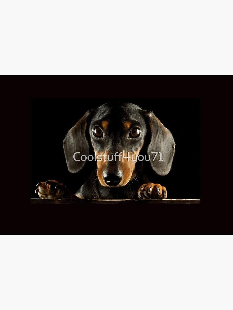 Dachshund Dog photo portrait by Coolstuff4you71