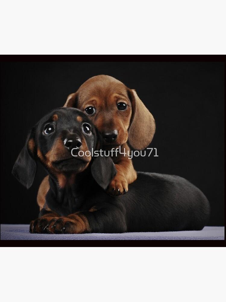 Dachshund Dog portrait photo pupies by Coolstuff4you71