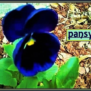 Pansy by dendelacroix