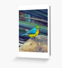 Orange-breasted Bunting Greeting Card