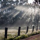 ~ Sunbeams ~ by LeeoPhotography