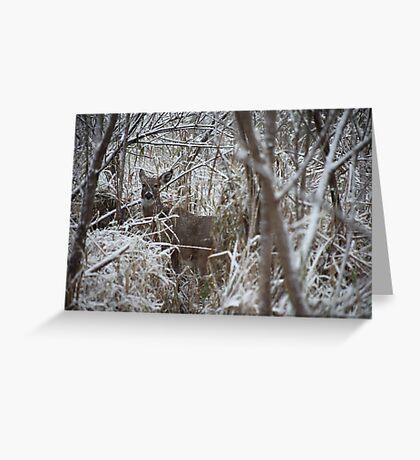 First Snow Doe Greeting Card