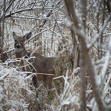 First Snow Doe by ThomasMurphy