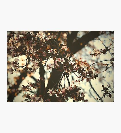 Spring daze... Photographic Print
