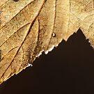 Golden by KAngeline