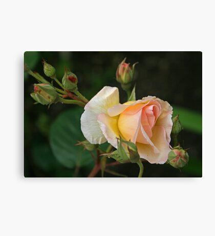 Peaches & Cream Canvas Print