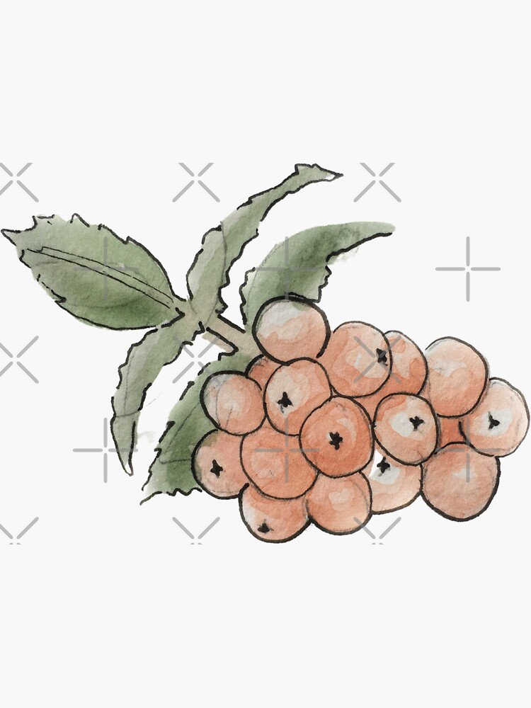 Rowan Berries Illustration in Watercolor by WitchofWhimsy