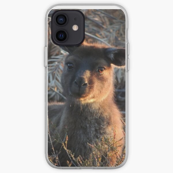 Western grey kangaroo (Macropus fuliginosus) - Kangaroo Island iPhone Soft Case