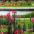 Summer park by Bluesrose