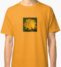 Pale Orange Marigold Flower With Garden Background Classic T-Shirt