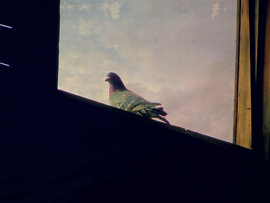 Pigeon In The Hay Loft Window by Diane Arndt