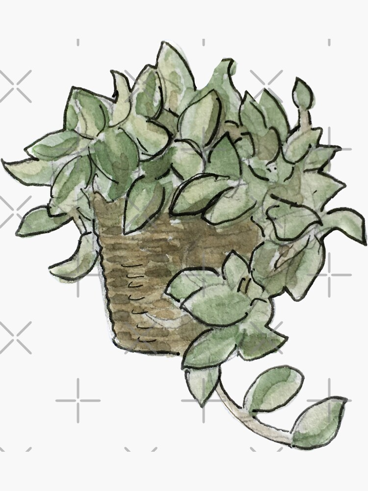 Pothos Plant in Wicker Basket Illustration in Watercolor by WitchofWhimsy