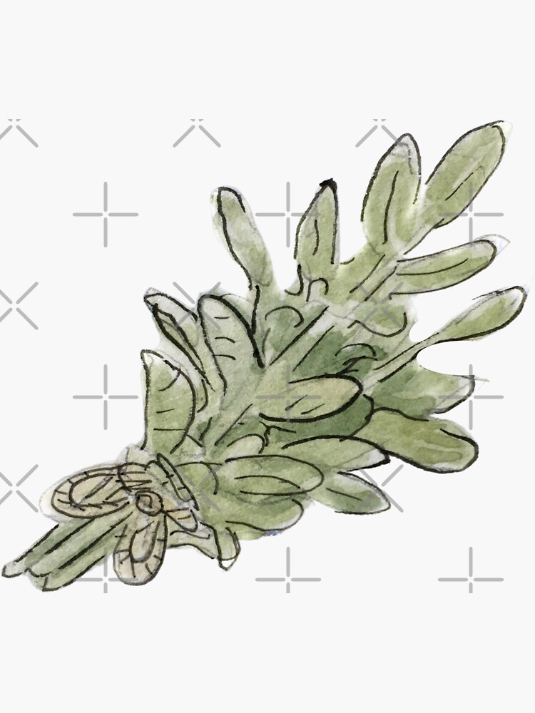 Sage Plant Bunch Illustration in Watercolor by WitchofWhimsy